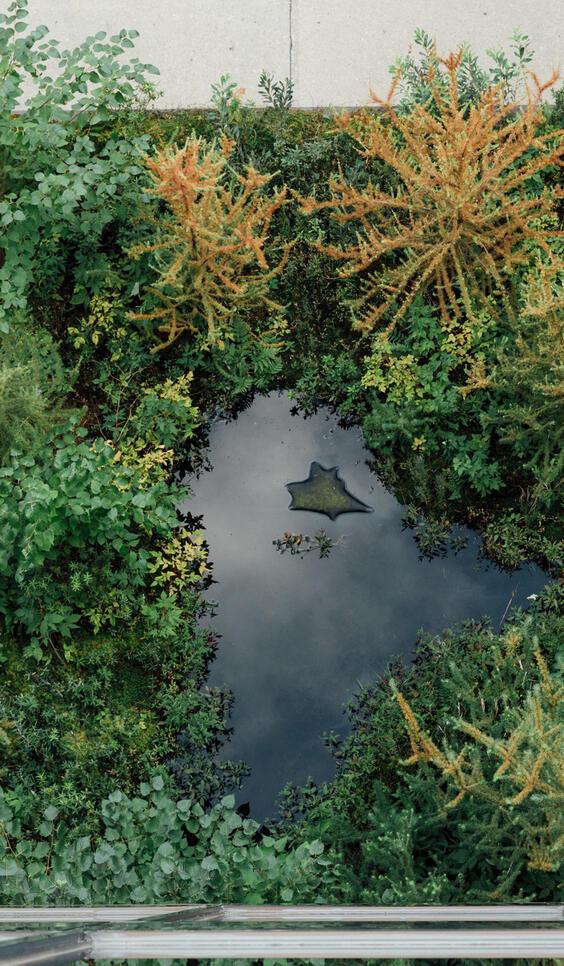 Aerial image of MCAD's rooftop bog