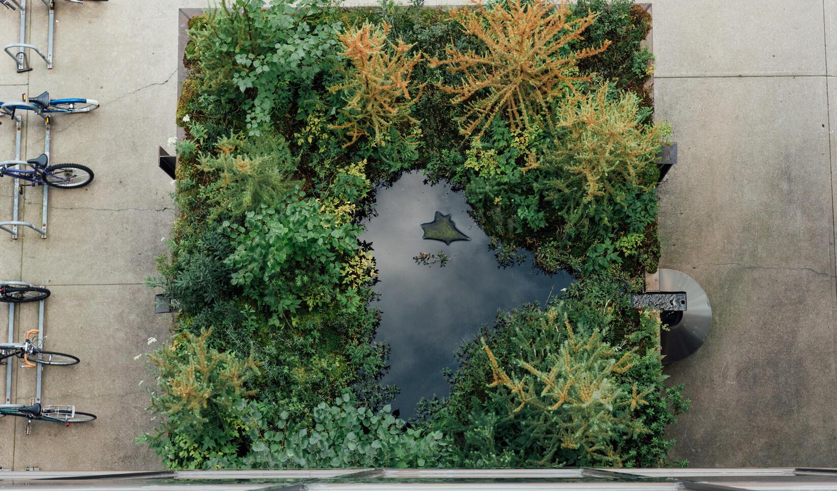 Aerial view of MCAD's rooftop bog